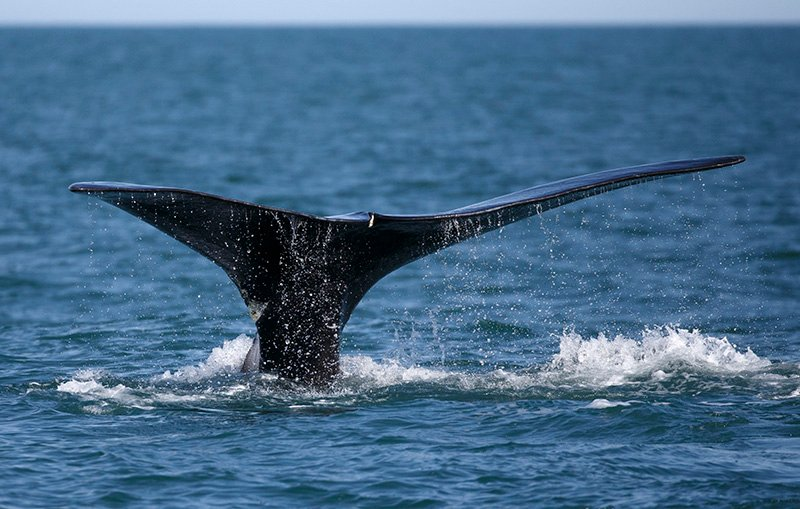 White House Oks Seismic Tests That Could Harm Atlantic Dolphins And Whales
