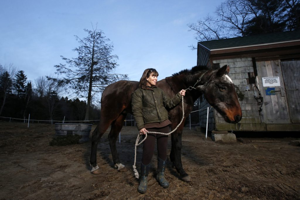 Jeanann Alves stands with Mercury, a 32-year-old stallion, at her Horse Island Camp on Peaks Island. Alves recently lost the shelters on the land she leases after the city issued 11 permitting citations and called for demolition.