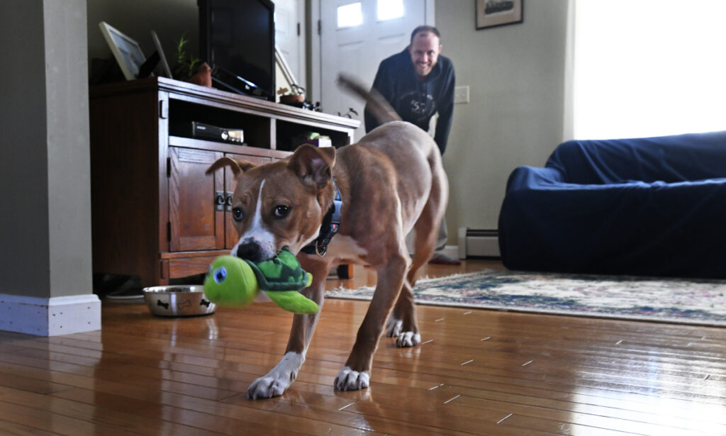 "Flora shows off her toy while playing with Brendan McKay on Friday. She was adopted three months ago and is ""very at home at this point."""