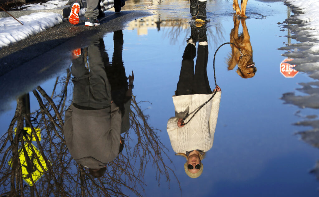 "Hayley Duval and golden retriever mix Herbie are reflected in a puddle during a stroll along Thames Street in Portland on Tuesday. Duval, of Boston, Mass., said the unseasonable weather was ""absolutely gorgeous."""