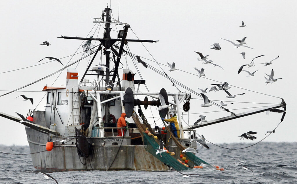 Gulls follow a shrimp fishing boat as crewmen haul in their catch in the Gulf of Maine in 2012. The state's historic shrimp industry has been closed since 2013.