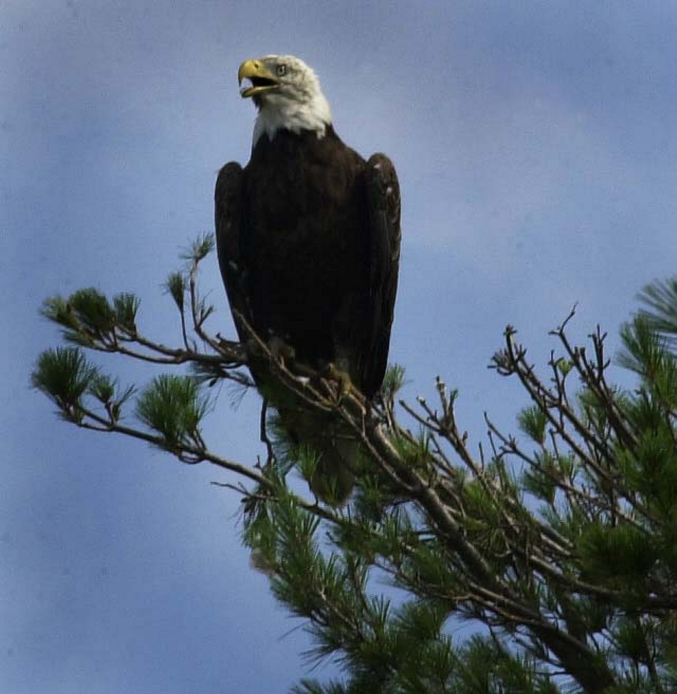A rare sighting of a bald eagle sends a powerful message to an anxious angler.