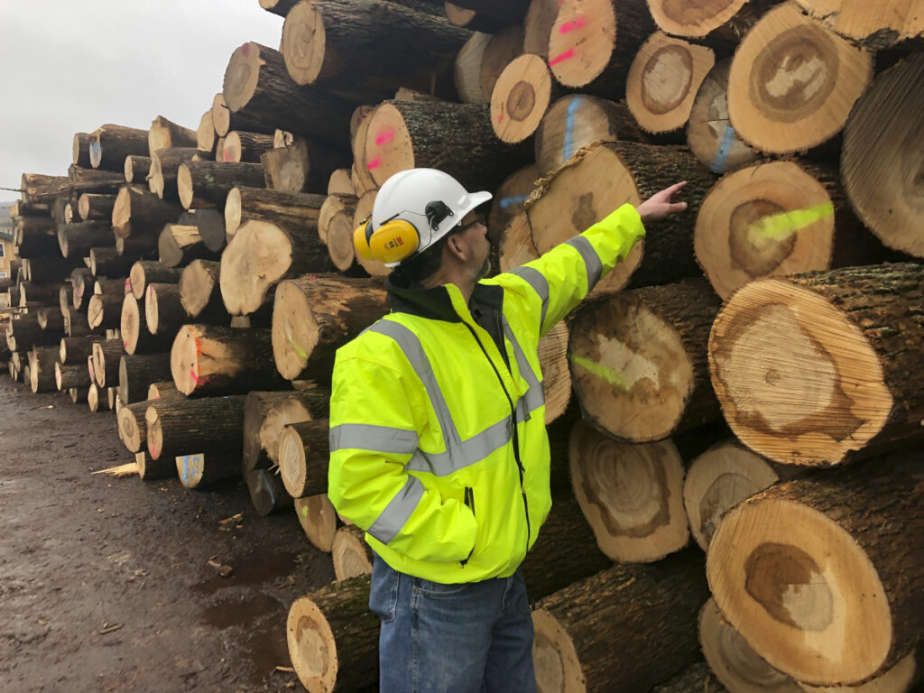 Tom Gerow, a general manager at The Wagner Cos., inspects ash logs Feb. 7 at the company's mill in Owego, N.Y. The emerald ash borer is decimating ash trees in dozens of states and loggers are harvesting the popular wood while it's still available.