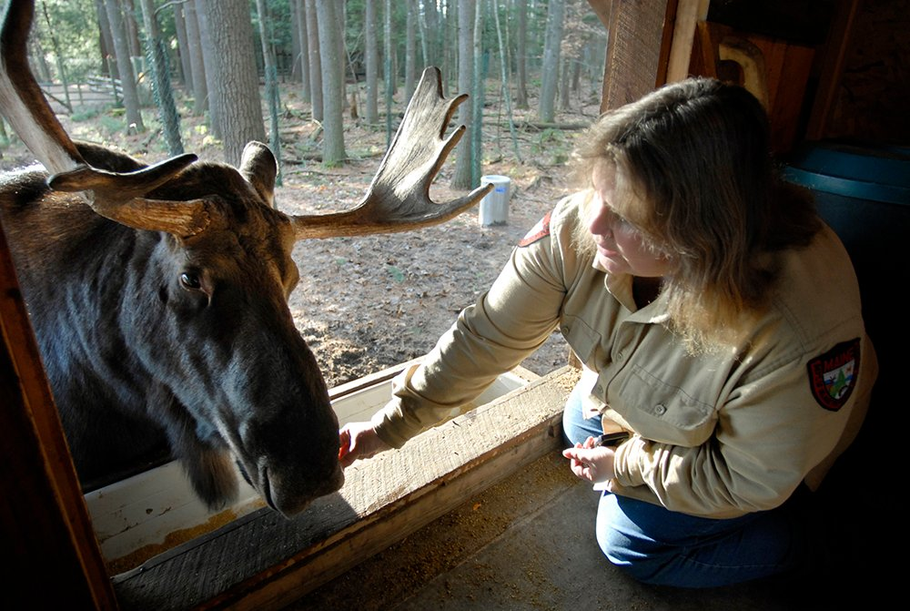 Pam Richardson feeds George at the Maine Wildlife Park in 2006.