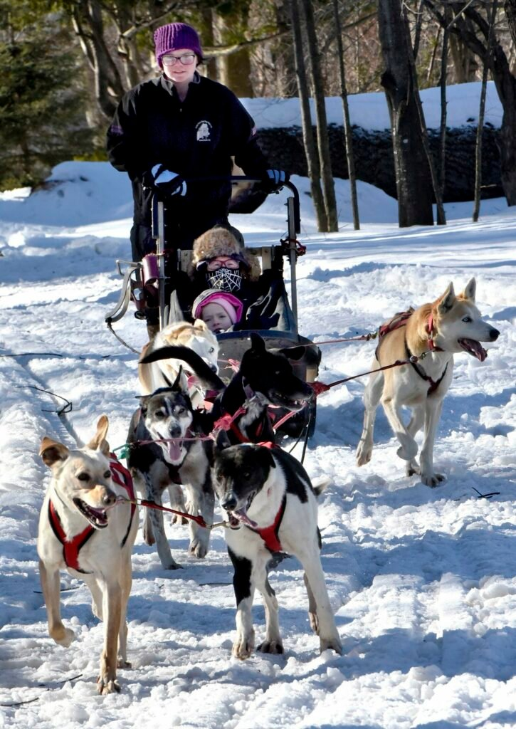Musher Megan Strout, of Ultimate Dogsledding Experience, and her team of dogs pull passengers Sunday on a trail at Coburn Park in Skowhegan during the last day of the Somerset SnowFest event.