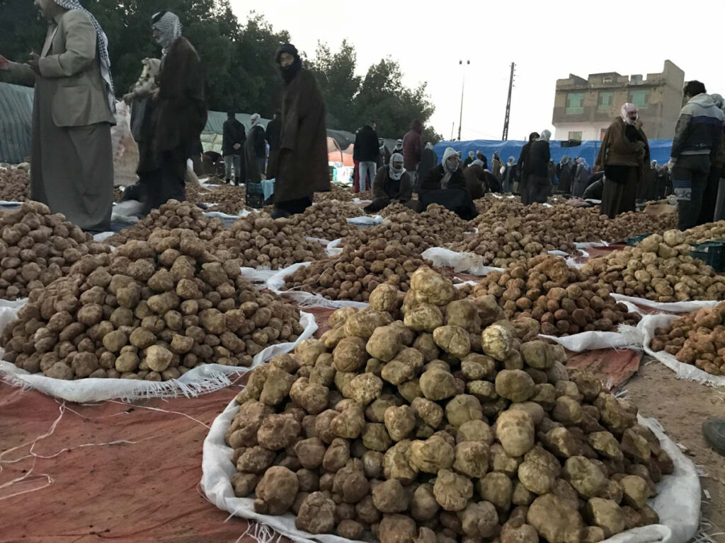 Merchants congregate before daybreak to sell mounds of truffles. Quality truffles sell for as low as roughly $3 a pound all the way up to more than $10 a pound in Baghdad and nearly $25 when exported.