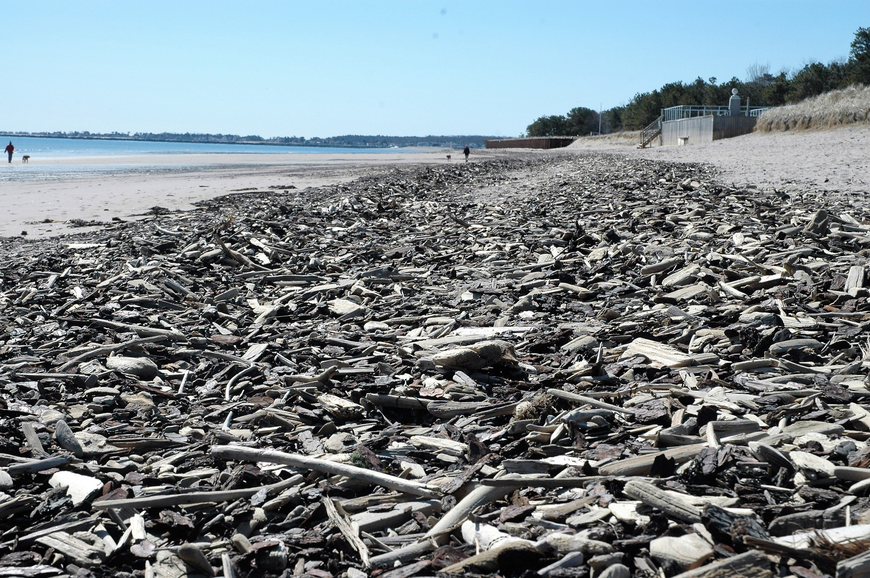 Beach replenishment brings driftwood with it to Saco