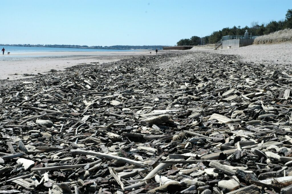 Bayview Beach in Saco is covered with a layer of driftwood, the result of a nearby dredging operation. The phenomenon has attracted plenty of collectors to the beach.