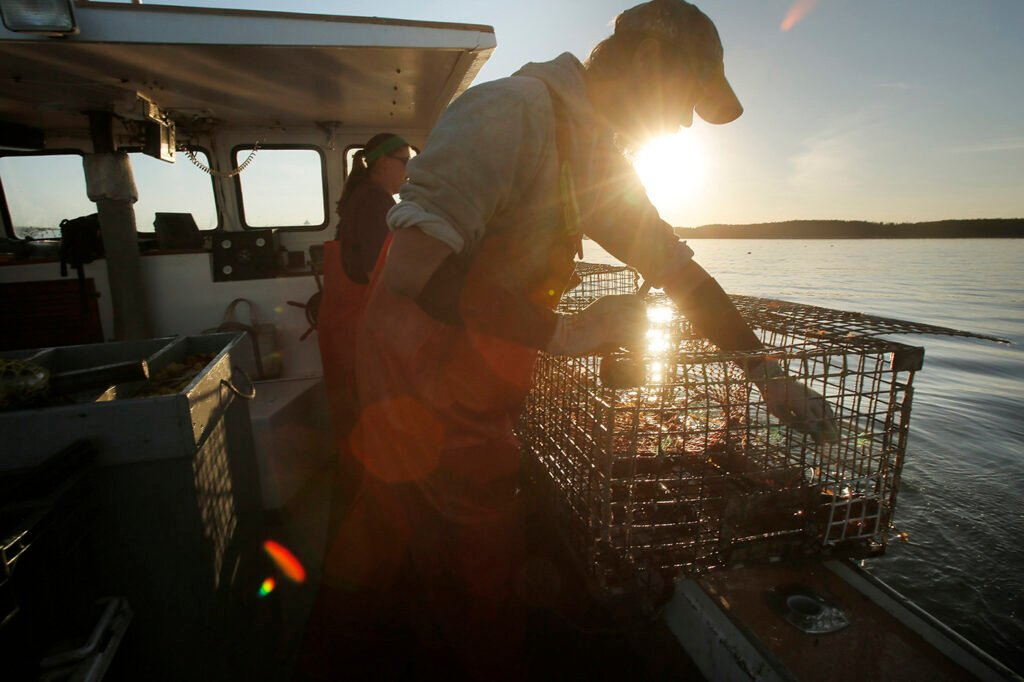 Cory McDonald removes a bait bag from a lobster trap while fishing off the coast of Stonington in   2015.