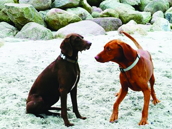 Dogs must be leashed in summer on Saco beaches