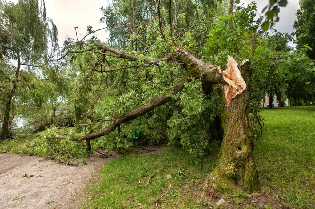 One of the biggest threats during any storm is tree damage.